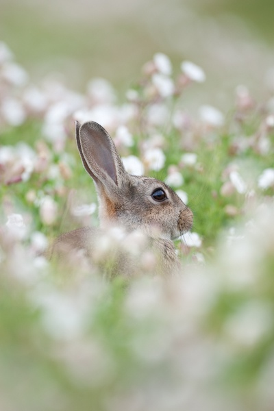 hiding in the flowers by pronature