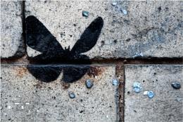 Butterfly & Blu-tack