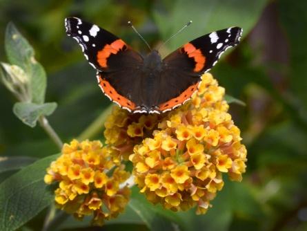 Butterfly by MrBMorris