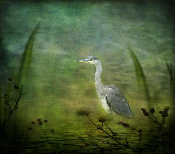Heron by Suehh