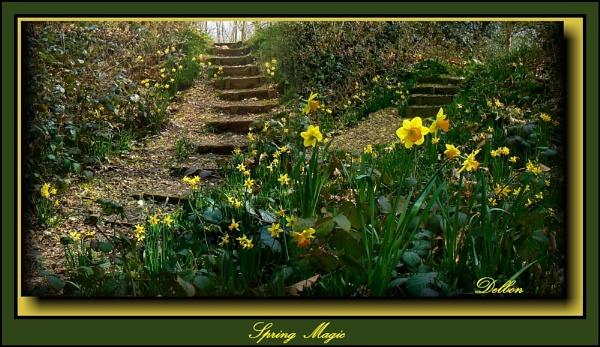Spring Magic by Delbon