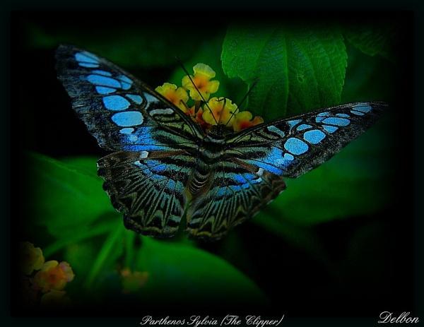 Blue Beauty by Delbon