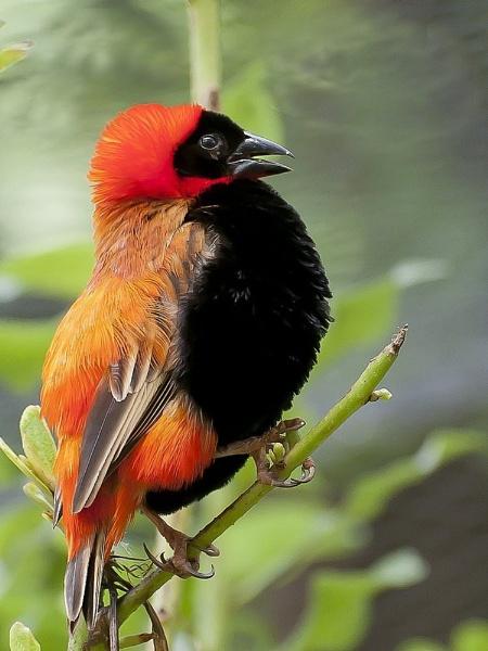 Red Bishop by Kruger01