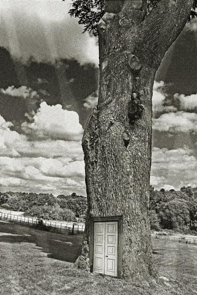 Treehouse by anpix