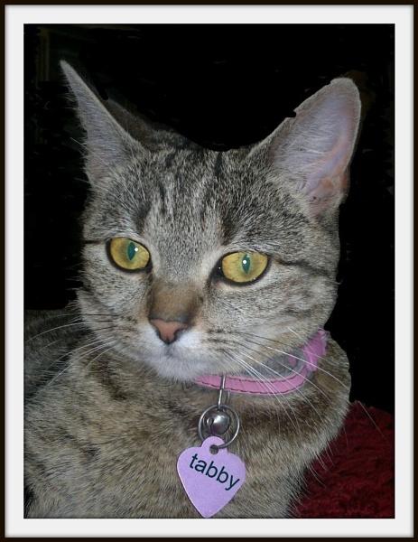 tabby cat by kazzy1963