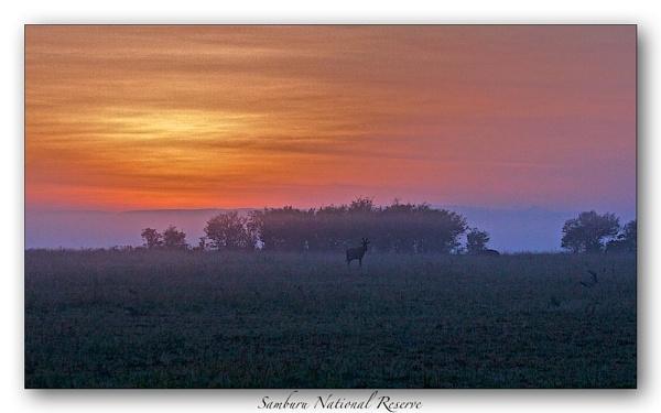 Samburu Dawn by mjparmy