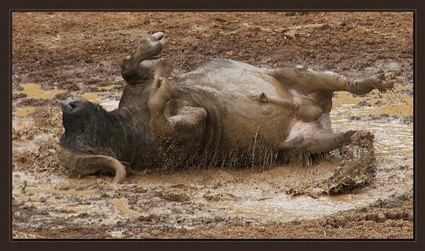 Mud Bath by mjparmy