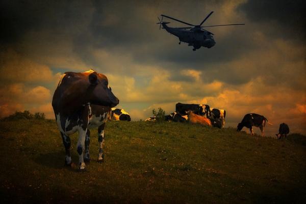 Apocalypse Cows by Audran