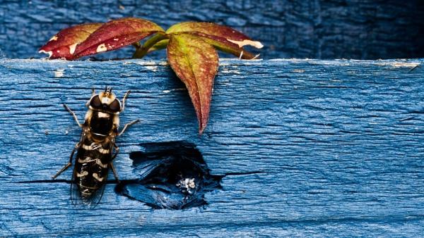 Bug on Blue by ninetofortytwo