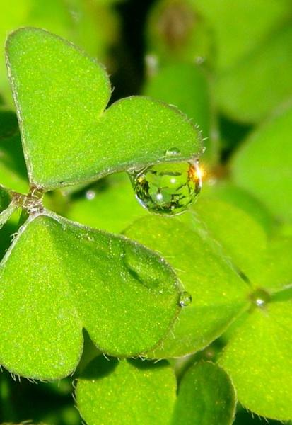 Water Droplets by MingM