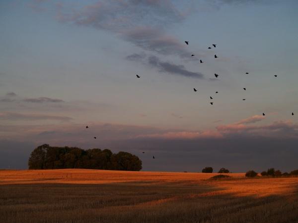 Return to Crow Wood by peterkin