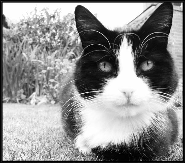 feline friend by Rach_s