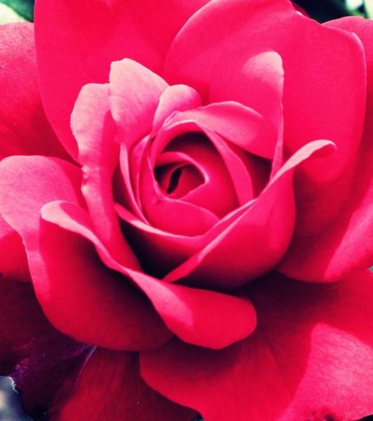 pritty flower by toniiixx