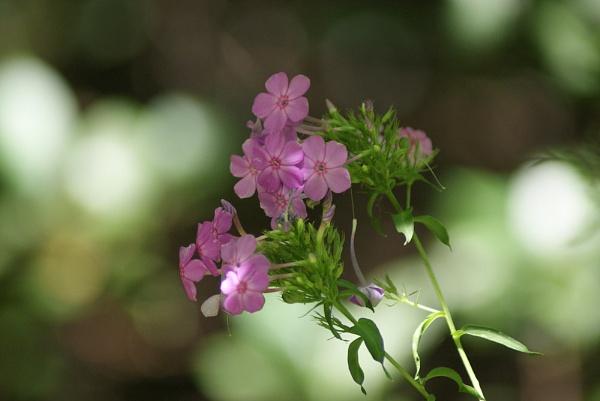 Wild Flowers by RickFreid