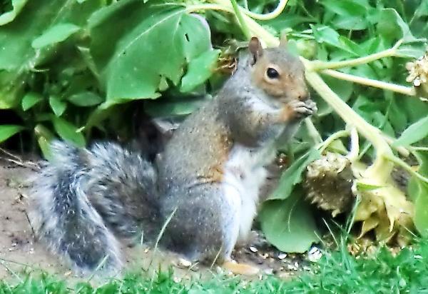 Garden Visitor by Gypsyman