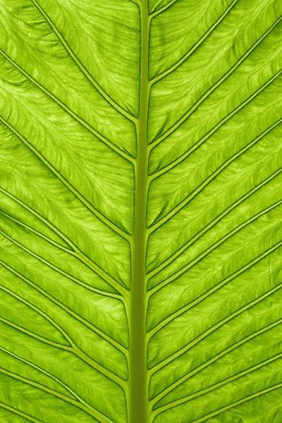 Palm Leaf by nbatchford