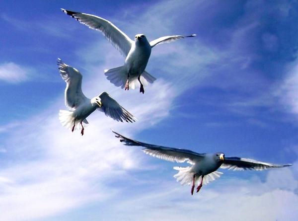 Gulls by stychy
