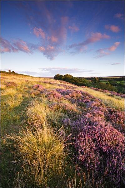 North York Moors by lee beel