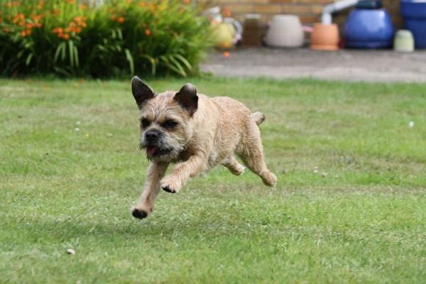 jumping dog by jojojellybean