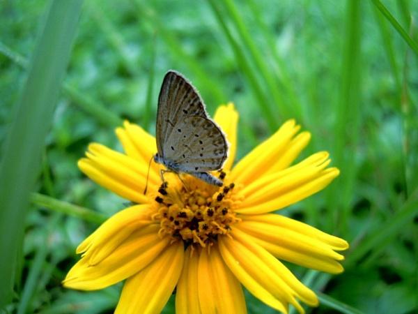 Butterfly of flowers by Foxaline
