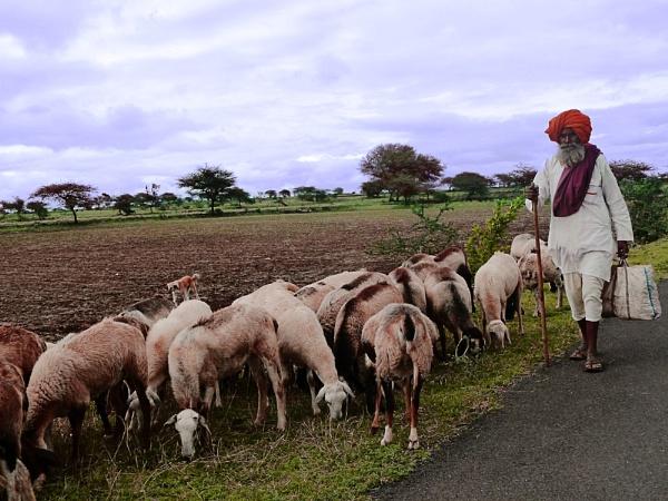 shepherd by bglimaye