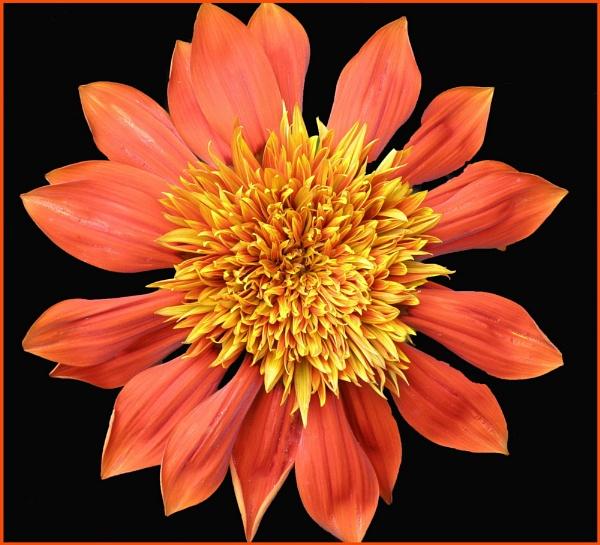Orange Flower by Rach1970