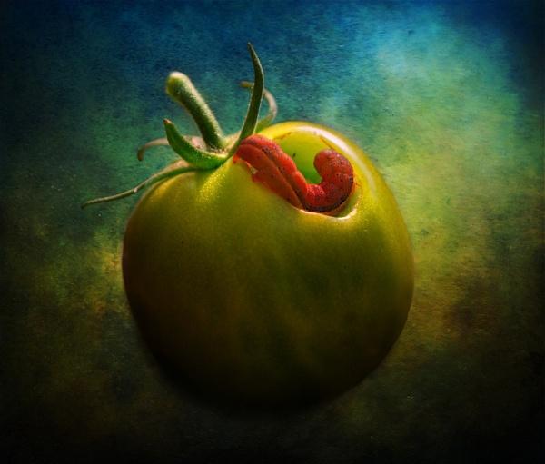 Tomato Raider by Audran