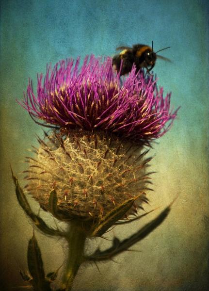 Bee Landing by Audran