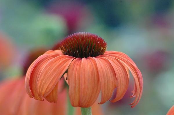 orange flower by love_photo
