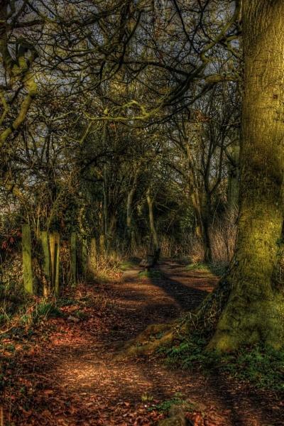 Woodland Path by GillSleePhotography