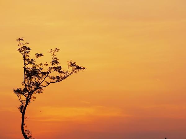 one tree by widjaba