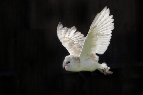 Night Owl by williamthorpe271