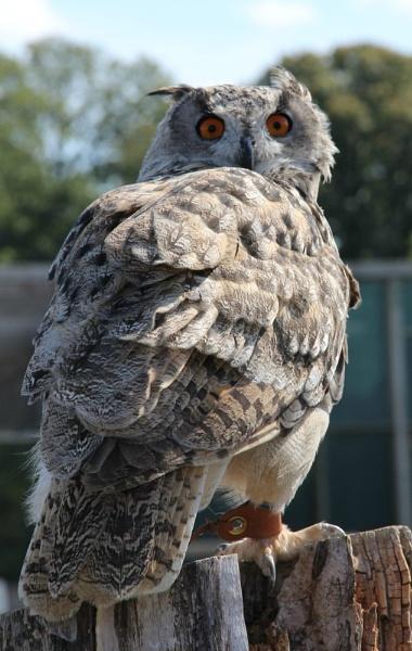 Hermen Owl by JadeClark