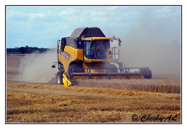harvest by cheekyamyleigh