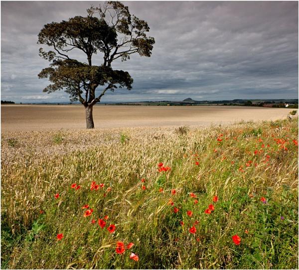 Athelstaneford... by Scottishlandscapes