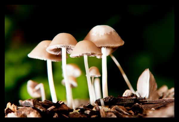 Fungi by BigRick