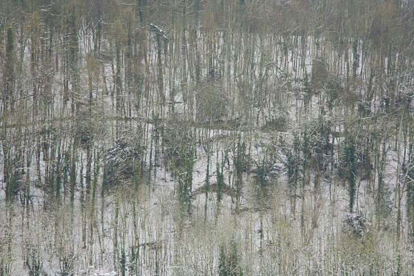 Winter Trees in the style of Pollock by JeffreyW