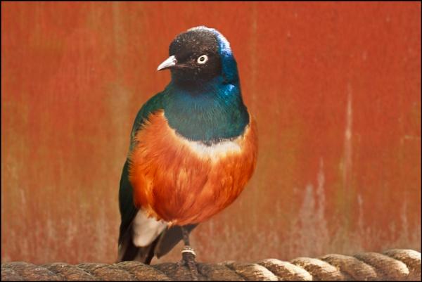 A Bird! by cabbie
