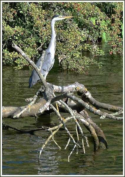 Thames heron by JPatrickM