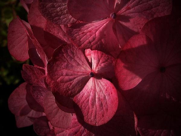 pink by awjay