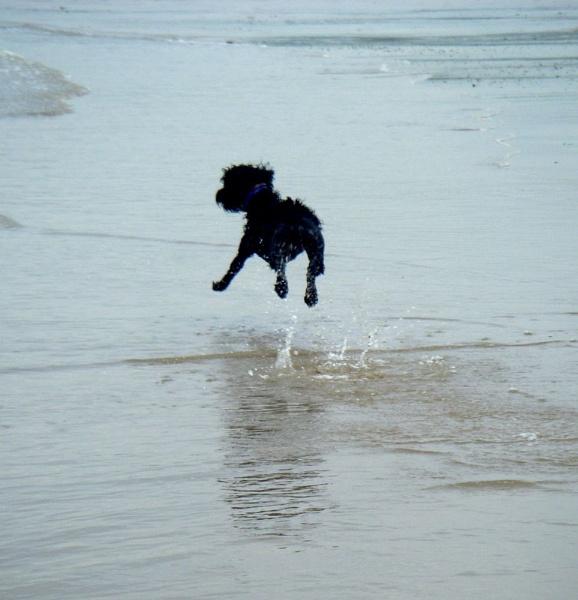 Jumping Jack by carp_27