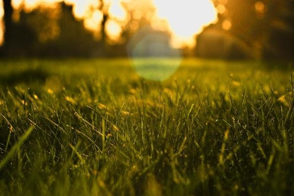Spring Grass 3 by WilliamRoar