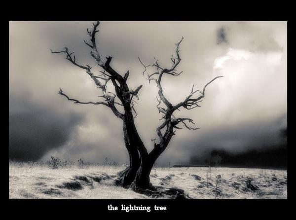 the lightning tree by raygregson