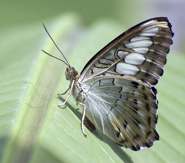 Butterfly by Rachel99