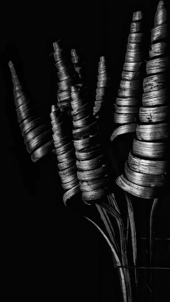 Spirals by Carrera_c