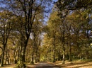 Avenue of trees in the Autumn