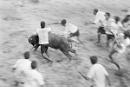 Chasing the bull