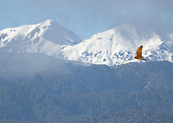 Tararua snow by paulknight