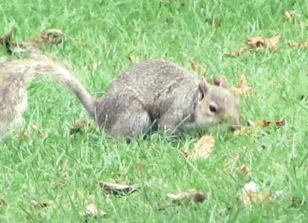 Mr Squirrel by toniiixx