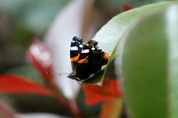 butterfly !! by Jen10